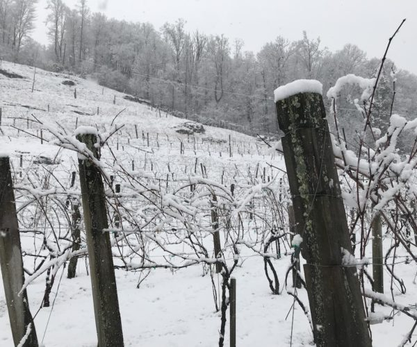 winter grandfather vineyard and winery